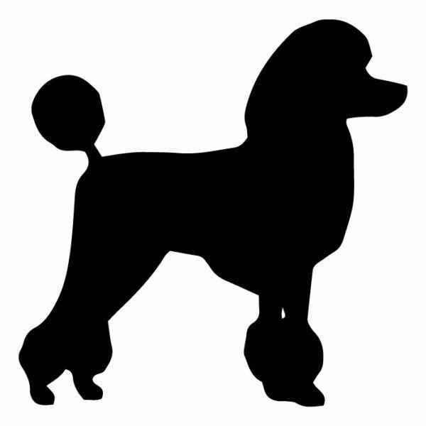 Originální samolepka na auto s psím motivem - Pudl