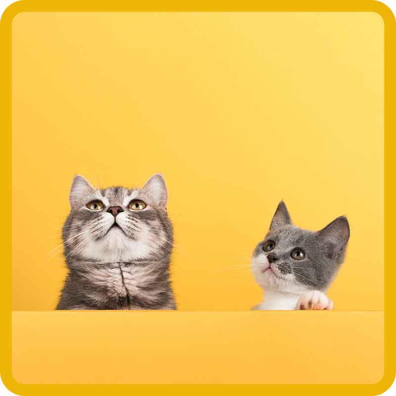 Hrnky Kočky